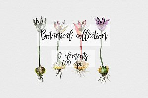 Botanacal collection. Watercolor set