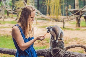 Young woman is fed Ring-tailed lemur - Lemur catta. Beauty in nature. Petting zoo concept
