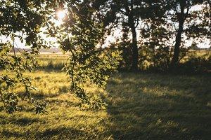 Summer Sun shining through leaves