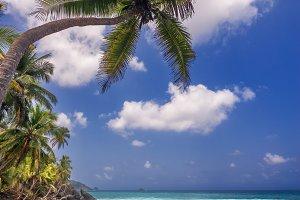 Single Palm Tree and Sea