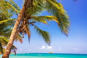 Palm Tree and Caribbean