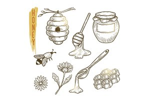 Set of honey elements. Vector sketch of sweet organic product isolated on background.