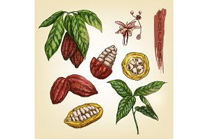 Sketch of cocoa elements. Vector colourful chocolate ingredient.