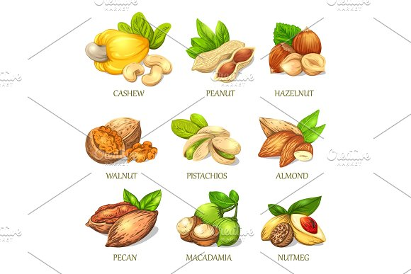 Colourful Sketch Of Different Kinds Of Nuts Vector Isolated Kernels Collection
