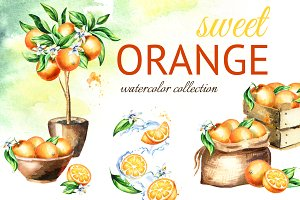 Sweet Orange. Watercolor collection