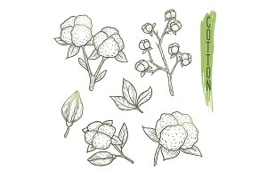 Sketch of cotton plant elements with branches, leaves, flowers and balls. Vector illustration.