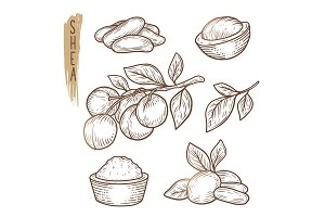 Sketch of shea elements. Vector set of branches, leaves, nuts and butter silhouettes.