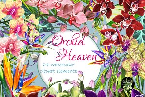 Orchid Heaven 24 watercolor cliparts