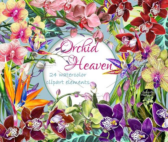 Orchid Heaven 24 Watercolor Cliparts
