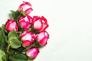 Rose flower background. Top view.