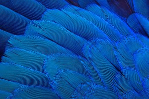 Bird's feathers background
