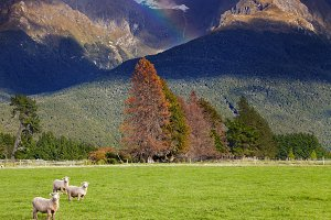 New Zealand landscape, South Island