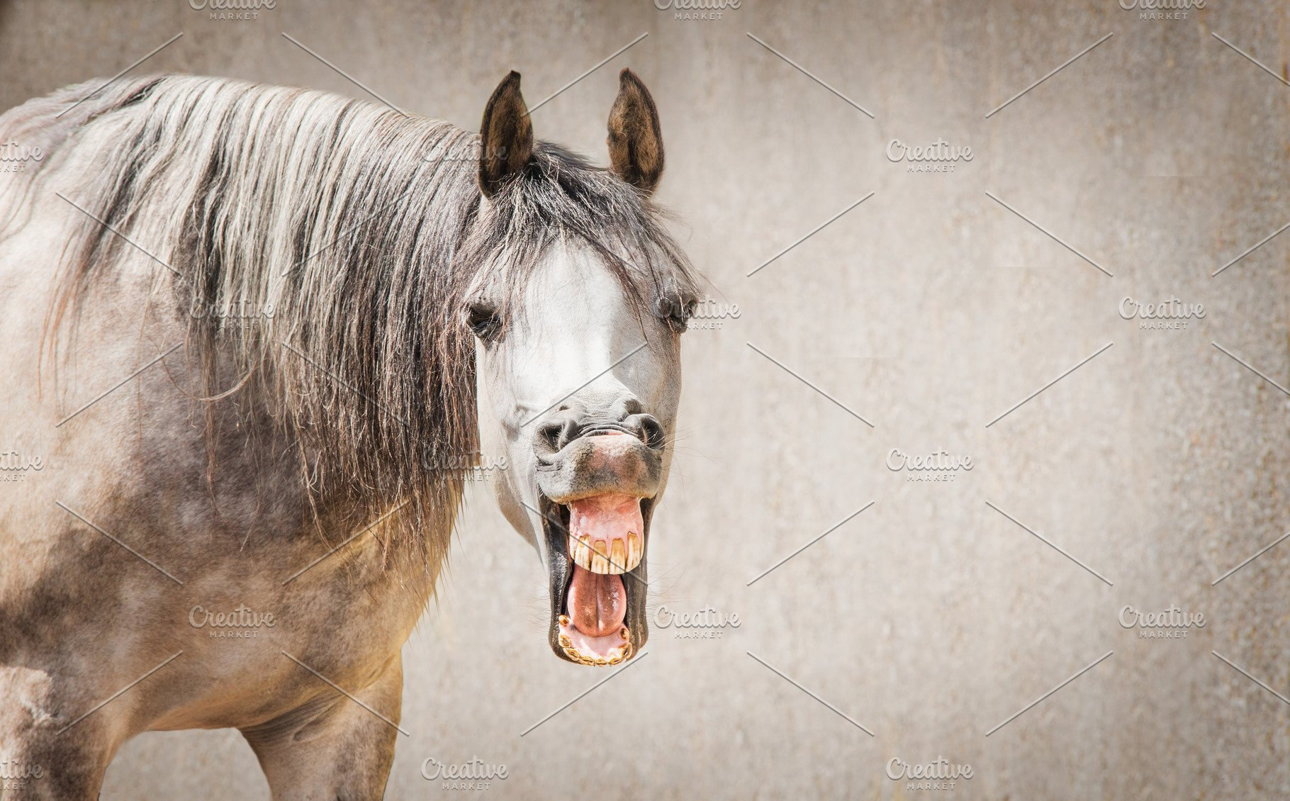 Funny Horse Face With Open Mouthed