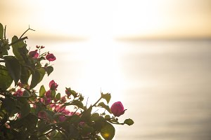 Flowers at sunrise by the sea