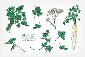 Parsley set and seamless pattern