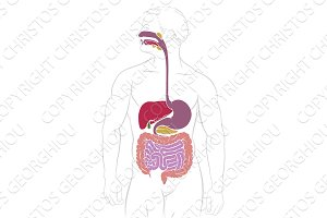 Digestive System Gastrointestinal Tract Diagram