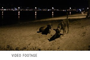 Three stray dogs in beach by night