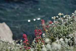 the flowers on the seashore