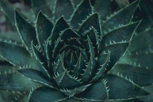 Dark green plant