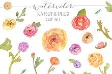 Watercolor Ranunculus Clip Art