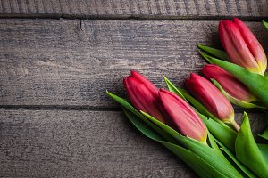 Spring tulips flowers on Background