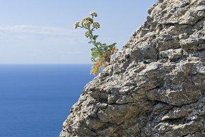 Flowering plant on the coastal rock