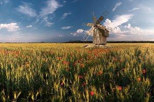Wheat field with windmills