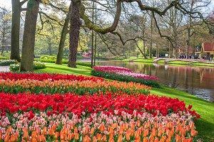 Keukenhoff park