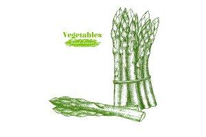 Asparagus Hand Draw Sketch