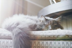 Grey Fluffy Kitten with Lens Flare