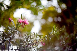 flowers on  bokeh background