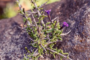 Purple flower on rock