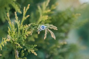 Gorgeous Engagement Ring on Fir Tree