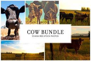 Cow Stock Bundle