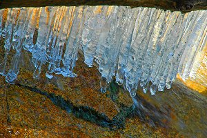 Macro Of Icicles On Tree Branch