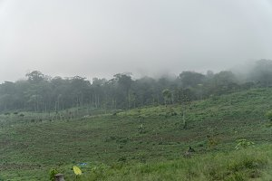 Farmland in the mountains in the cloud. Bali,Indonesia.