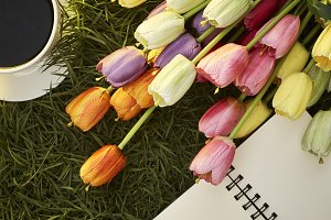 Colorful Tulips with Blank Note