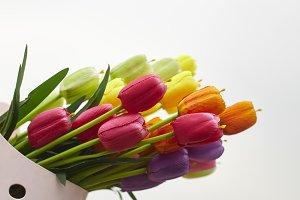 tulips bunch of fresh