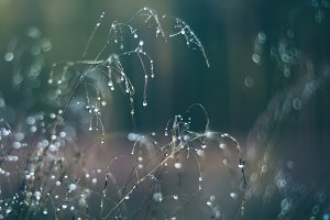 Dry grass in the forest with dew