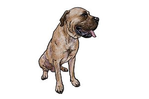 Drawing of mastiff dog