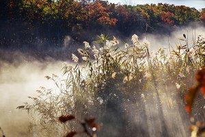Autumn mist in river