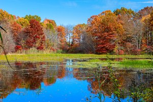Pond in autumn, yellow leaves, lake
