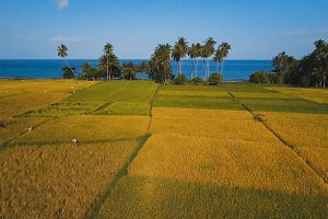Aerial view of a rice field. Philippines