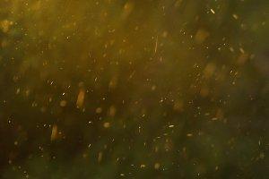 Summer rain drops
