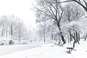 Snow Covers A Park