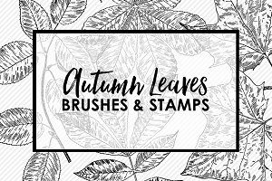 Autumn Leaves PS Brushes & Stamps