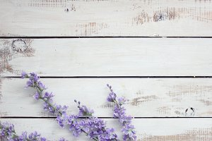 Floral lavender on white wood