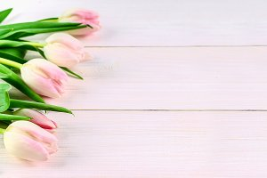 Pink tulips on white background, ban