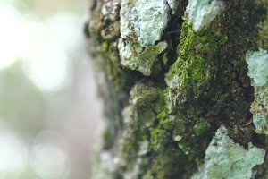 Mossy Tree Trunk