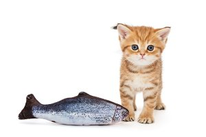 Little kitty and  fish